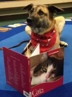 Skoki the Trained Therapy Dog